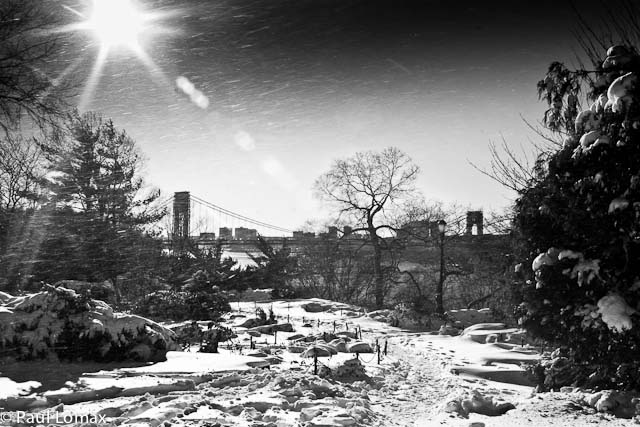 Fort Tryon Park Holiday Card Photo Competition